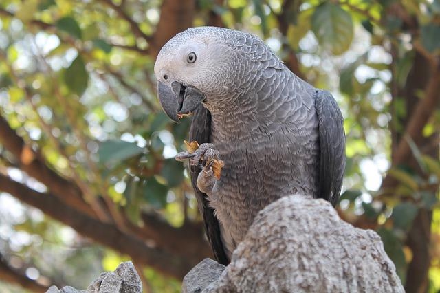 drápky  papouška.jpg